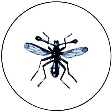 Двукрылые, или мухи 1977 Дмитриев Ю