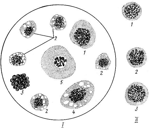 Гемолимфа здоровых насекомых