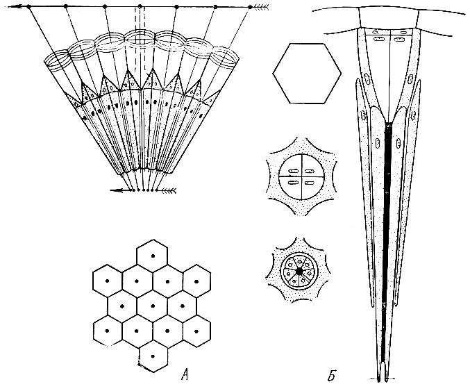 Схема строения омматидия