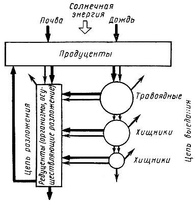 Поток энергии (тонкие стрелки)